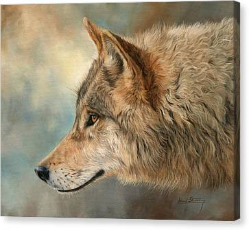 Grey Wolf 3 Canvas Print by David Stribbling