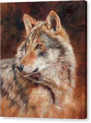 Wild Dogs Canvas Print - Grey Wolf Portrait by David Stribbling