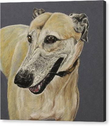 Greyhound Canvas Print by Jeanne Fischer