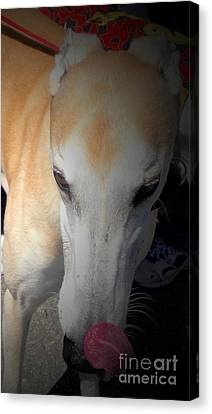 Greyhound Canvas Print - Greyhound Rescue 2 by Jackie Bodnar