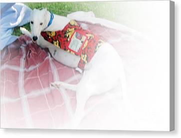 Greyhound Canvas Print - Greyhound Rescue 5 by Jackie Bodnar