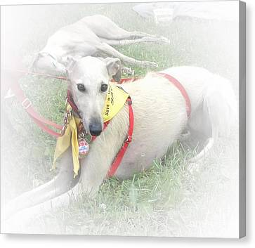 Greyhound Canvas Print - Greyhound Rescue 7 by Jackie Bodnar
