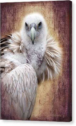 Griffon Vulture Canvas Print by Barbara Orenya