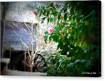 Canvas Print featuring the photograph Grist Mill Roses by Tara Potts