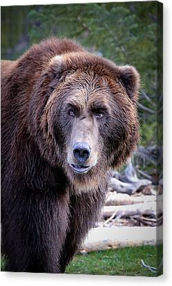 Canvas Print featuring the photograph Grizzly by Athena Mckinzie