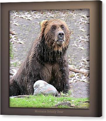 Grizzly Bear 03 Canvas Print