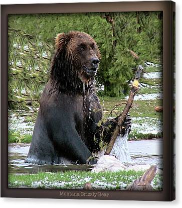 Grizzly Bear 08 Canvas Print by Thomas Woolworth