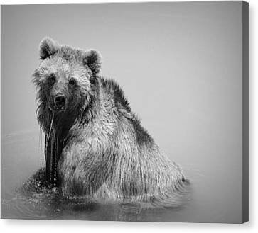 Grizzly Bear Bath Time Canvas Print