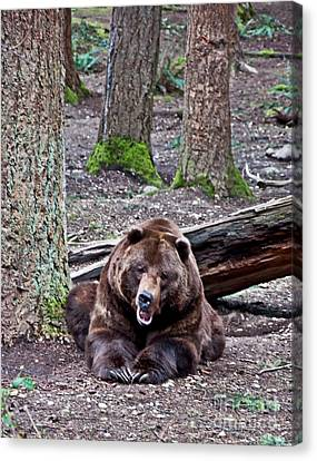 Grizzly Bear Growling In Forest Canvas Print by Valerie Garner