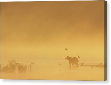 Grizzly Bear In Morning Fog Canvas Print by Matthias Breiter