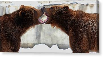 Canvas Print featuring the photograph Grizzly Bears Facing Off by Jerome Lynch