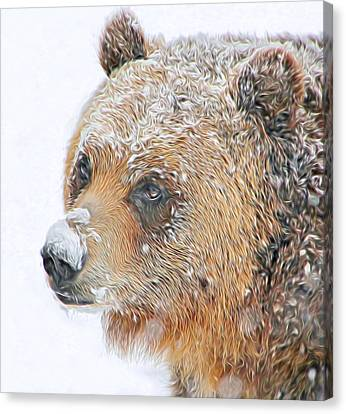 Grizzly Frost Canvas Print