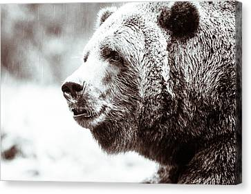 Grizzly In Black And White Canvas Print by Wade Brooks