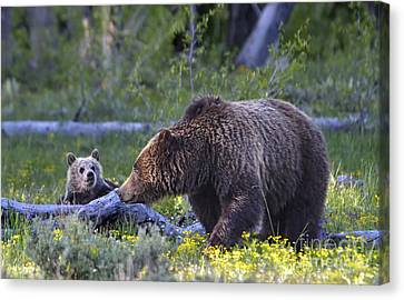 Grizzly Sow And Cub Canvas Print