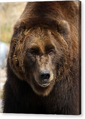 Canvas Print featuring the photograph Grizzly by Steve McKinzie