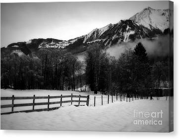 Groaning Trees Canvas Print