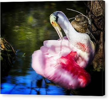 Preening Spoonbill Canvas Print by Mark Andrew Thomas