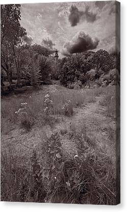 Gross Point Beach Grasses Bw Canvas Print by Steve Gadomski