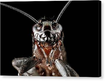 Ground Cricket Canvas Print by Us Geological Survey