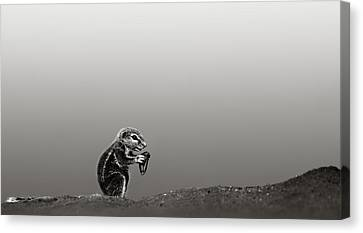 Ground Squirrel Canvas Print by Johan Swanepoel