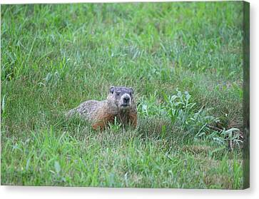 Groundhog Reconnaissance Canvas Print by Neal Eslinger