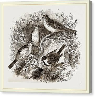 Bunting Canvas Print - Group Of Buntings by Litz Collection