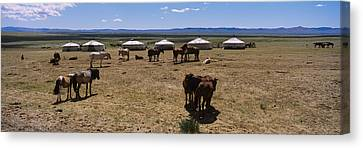 Group Of Horses And Yurts In A Field Canvas Print
