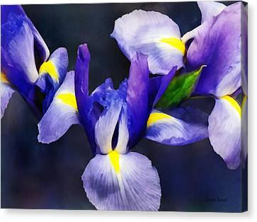 Group Of Japanese Irises Canvas Print by Susan Savad
