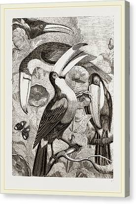 Group Of Toucans Canvas Print by Litz Collection