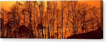 Grove Of Alder Trees In Humboldt Canvas Print by Panoramic Images
