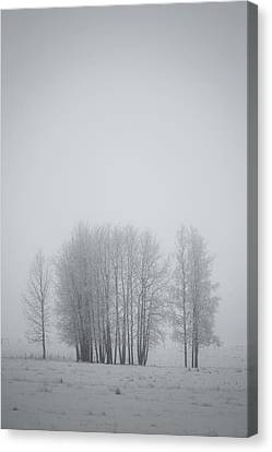 Grove Of Trees Covered In Hoar Frost On Canvas Print by Roberta Murray