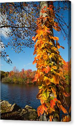 Growing Colors Canvas Print by Karol Livote