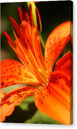 Growing Flame Canvas Print by Kim Lagerhem