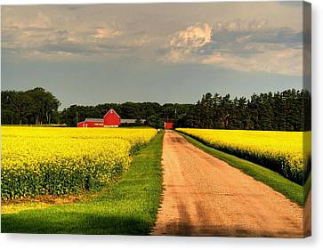 Growing For Gold Canvas Print by Larry Trupp