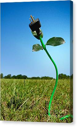 Eco-friendly Canvas Print - Growing Green Energy by Amy Cicconi