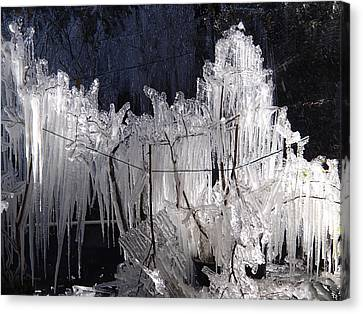 Growing Icicles In Florida Canvas Print