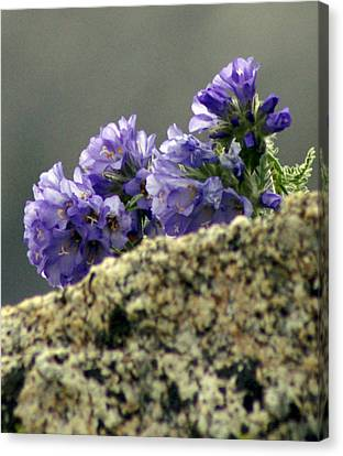 Canvas Print featuring the photograph Growing In Granite by Jeremy Rhoades