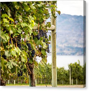 Growing On The Vine Canvas Print by Mike Houghton BlueMaxPhotography