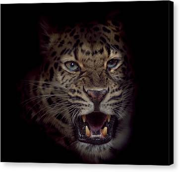 Canvas Print featuring the photograph Growl by Cheri McEachin