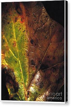 Growth-leaf Canvas Print
