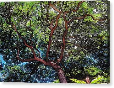 Ala Wai Canvas Print - Growth by Terry Reynoldson