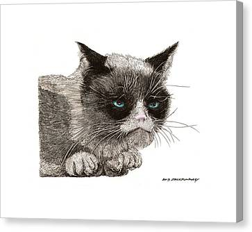 Grumpy Pussy Cat Canvas Print by Jack Pumphrey