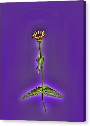Grunge Flower - Zinnia Canvas Print by Larry Bishop