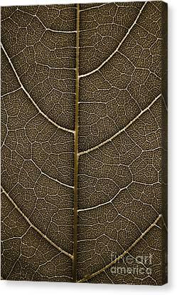 Grunge Leaf Detail Canvas Print