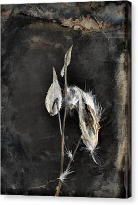 The Seeds Of Dark Nature Canvas Print by Gothicrow Images