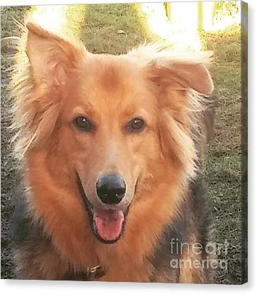 #gsd #germanshepherd #germanshepherddog Canvas Print by Isabella F Abbie Shores FRSA
