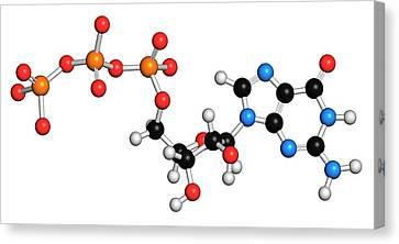 Guanosine Triphosphate Molecule Canvas Print by Molekuul
