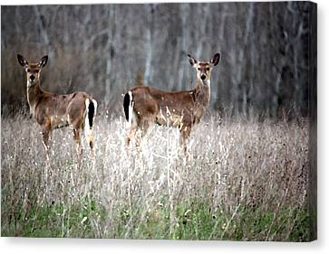 Canvas Print featuring the photograph Guard Duty Whitetail Deer by Penny Hunt