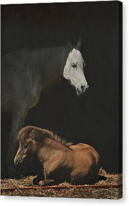 Guardian Canvas Print by Odd Jeppesen