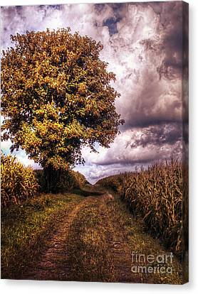 Guardian Of The Field Canvas Print